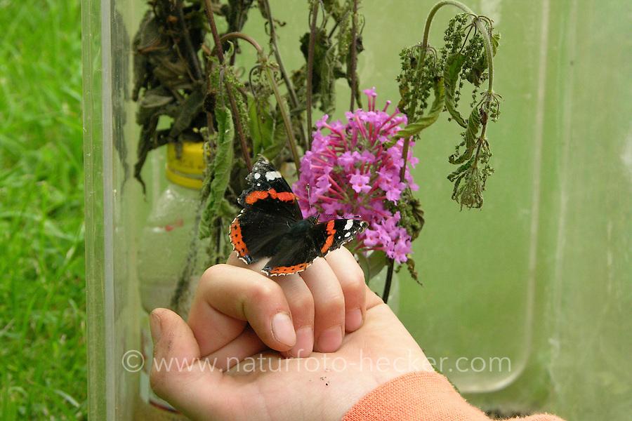 Kinder züchten Schmetterlings-Raupen, Terrarium war mit einem Strauß frischer Brennnesseln als Raupenfutterpflanze versehen, Raupe vom Admiral hat sich darin verpuppt und ist nun als fertiger Falter geschlüpft, Mädchen bietet ihm Schmetterlingsflieder, Buddleja als Nektarpflanze an, Vanessa atalanta, red admiral