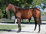 Hip #124 A.P. Indy - Million Gift (JPN) filly at the  Keeneland September Yearling Sale.  September 9, 2012.
