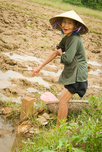 An elderly Vietnamese woman works in the fields. Her teeth are black from the betel nut. Betel nut is a mild stimulant and chewed or smoked in a similar way to tobacco.