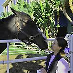 Nov. 03, 2012 - Arcadia, California, at Santa Anita Park in Arcadia, CA. (Credit Image: © Jimmy Jones/Eclipse/ZUMAPRESS.com)