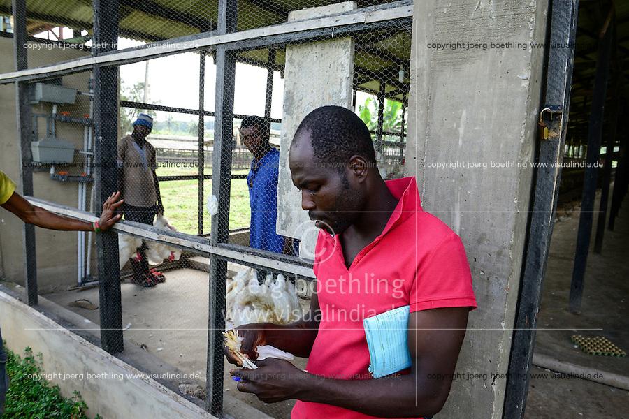 NIGERIA, Oyo State, Ibadan, loading of old layer hens for sale as live chicken on markets in Lagos / Legehennenhaltung, Verladung alter Legehennen zum Verkauf als Suppenhuhn auf Maerkten in Lagos