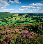 Grossbritannien, England, North Yorkshire, North Yorkshire Moors National Park: Heidelandschaft bei Great Ayton | Great Britain, England, North Yorkshire, North Yorkshire Moors National Park: view over Heather and farmland near Great Ayton