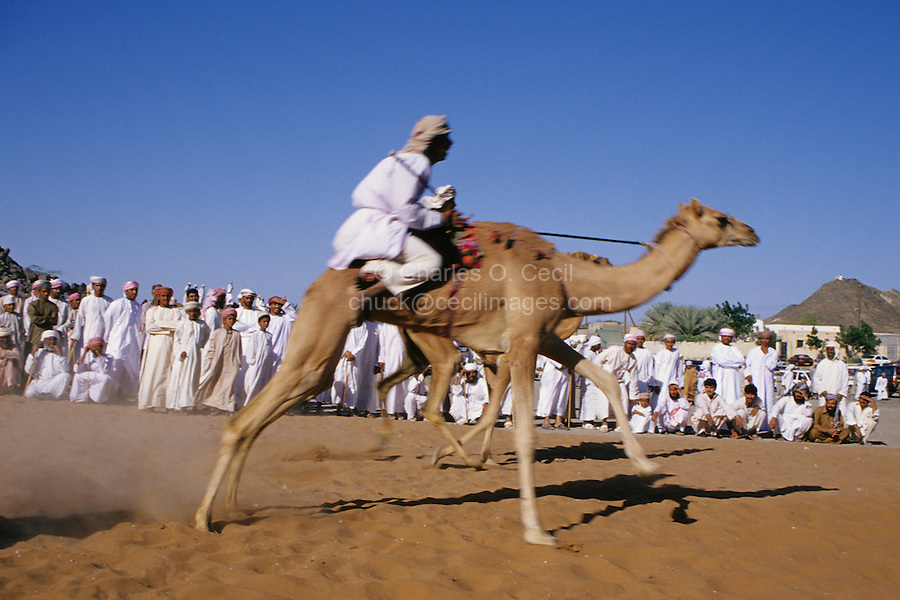Mudayrib, Oman, Arabian Peninsula, Middle East - Camel race.  Races are part of the festivities at the Eid al-Adha (Feast of the Sacrifice), the annual feast through which Muslims commemorate God's mercy in allowing Abraham to sacrifice a ram instead of his son, to prove his faith.