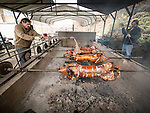 Pigs on a slit roasting for the Christmas feast<br /> <br /> Celebration of Christmas on the Julian calendar at  Serbian Orthodox Church Jackson.