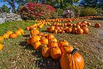 Autumn at Red Apple Farm in Phillipston, MA