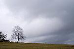 Europa, DEU, Deutschland, Rheinland-Pfalz, Naturpark Saar-Hunsrueck, Himmel, Wolken, Baum, Regenwolken, Kategorien und Themen, Natur, Umwelt, Landschaft, Jahreszeiten, Stimmungen, Landschaftsfotografie, Landschaften, Landschaftsphoto, Landschaftsphotographie, Wetter, Himmel, Wolken, Wolkenkunde, Wetterbeobachtung, Wetterelemente, Wetterlage, Wetterkunde, Witterung, Witterungsbedingungen, Wettererscheinungen, Meteorologie, Bauernregeln, Wettervorhersage, Wolkenfotografie, Wetterphaenomene, Wolkenklassifikation, Wolkenbilder, Wolkenfoto....[Fuer die Nutzung gelten die jeweils gueltigen Allgemeinen Liefer-und Geschaeftsbedingungen. Nutzung nur gegen Verwendungsmeldung und Nachweis. Download der AGB unter http://www.image-box.com oder werden auf Anfrage zugesendet. Freigabe ist vorher erforderlich. Jede Nutzung des Fotos ist honorarpflichtig gemaess derzeit gueltiger MFM Liste - Kontakt, Uwe Schmid-Fotografie, Duisburg, Tel. (+49).2065.677997, ..archiv@image-box.com, www.image-box.com]