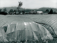 Landwirtschaft in Nonsani, Korea 1986.