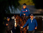 OCT 29: Breeders' Cup Juvenile Turf entrant Graceful Kitten, trained by Amador Merei Sanchez, at Santa Anita Park in Arcadia, California on Oct 29, 2019. Evers/Eclipse Sportswire/Breeders' Cup