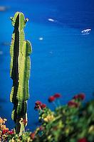 Europe/Italie/Calabre/San Nicolo di Ricadi : Cactus sur la côte