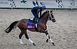 January 23, 2020: Arklow jogs on the main track as horses prepare for the Pegasus World Cup Invitational at Gulfstream Park Race Track in Hallandale Beach, Florida. John Voorhees/Eclipse Sportswire/CSM