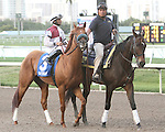 Fast Falcon post parade. Graybar with Edgar Prado wins the 57th running of the Grade 1 Donn Handicap for 4 year olds & up, going 1 1/8 mile, at Gulfstream Park.  Trainer - Todd Pletcher.  Owner - Twin Creek Racing Stable