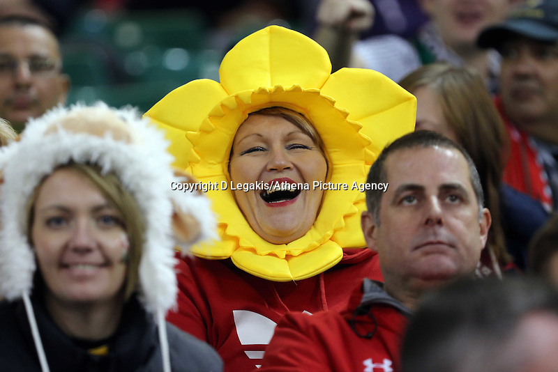 Pictured: A female Wales supporter wearing a daffodil. Saturday 29 November 2014<br /> Re: Dove Men Series 2014 rugby, Wales v South Africa at the Millennium Stadium, Cardiff, south Wales, UK.