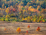 Fall arrives to a meadow in Cades Cove in the Great Smoky Mountains National Park in Tennessee, USA