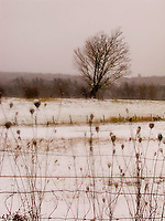 Single tree in snow covered field<br />
