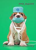 Xavier, ANIMALS, REALISTISCHE TIERE, ANIMALES REALISTICOS, dogsnurse,doctor,, photos+++++,SPCHDOGS994,#a#