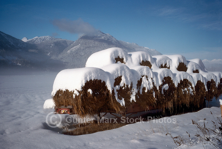 Snow Covered Hay Bales on Farm in Pemberton Valley near Whistler, BC, British Columbia, Canada - Southwestern BC Region, Winter