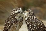 Kisisng Owls by Marta Demarteau