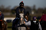 November 4, 2020: Next, trained by trainer Wesley A. Ward, exercises in preparation for the Breeders' Cup Juvenile at  at Keeneland Racetrack in Lexington, Kentucky on November 4, 2020. Alex Evers/Eclipse Sportswire/Breeders Cup