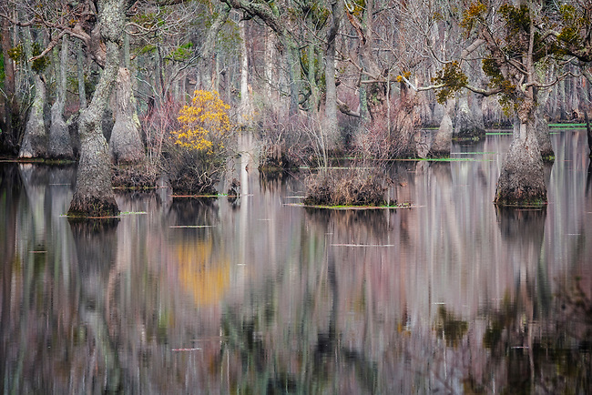 Winter in Lassiter Swamp, Merchant Mill Pond State Park, NC