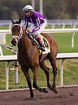 30 January 2010: Bad Action and jockey John Velazquez after the Sunshine Millions Turf Stakes at Gulfstream Park in Hallandale Beach, FL.
