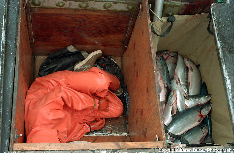 "Rama Geroux from Mill Valley, CA sleeps in a fish hold June 1997, The F/V Little Comfort, a salmon fishing boat, in Egegik River, Bristol Bay, Alaska. Bristol Bay is home to the world's largest sockeye salmon fishery. The commercial salmon drift gillnet fishing fleet is limited to boats no longer than 32 feet in length. There were over 1,800 permanent entry permits listed in 2002 which each vessel is required to have. Typically boats fish with two or three deckhands. Peak of the season is around July 4th in this fishery which lasts about a month. The rivers also get a fair amount of chum, king, and chinook salmon. Bristol Bay is located in the southwest part of Alaska. This fishery is managed by ""the Alaska Department of Fish and Game"" and is a sustainable fishery. Until around the year 2000, fishing on the Egegik North Line was lively and lucrative."