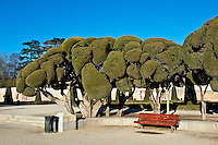 Sculpted trees, Retiro Park, Madrid, Spain