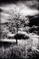 Solitary Tree in field<br />