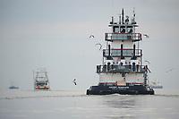 Laughing Gulls following a Gulf oil spill response tug at sunrise. Jefferson Parish, Louisiana. July 2010.