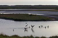 Salthouse, Norfolk, England, 10/08/2009..Wild bird sanctuary at Saltmarsh.