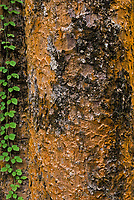 Vegetation; wood and bark, Cambodia