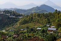 RWANDA; Ruhengeri, Volcanoes Nationalpark in Virunga mountains, home of the Mountain Gorilla / RUANDA, Ruhengeri, Berglandschaft Volcanoes Nationalpark in den Virunga-Bergen
