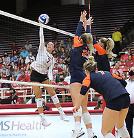 Arkansas Sophomore Taylor Head (7) spikes ball against Auburn  on Sunday, Oct. 10, 2021, during play at Barnhill Arena, Fayetteville. Visit nwaonline.com/211011Daily/ for today's photo gallery.<br /> (Special to the NWA Democrat-Gazette/David Beach)