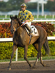 30 January 2010: Granted Tiger and jockey Eddie Castro after the Sunshine Millions Distaff Stakes at Gulfstream Park in Hallandale Beach, FL.