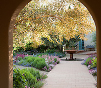 Entry path under olive tree to sunny California terrace garden room with central fountain