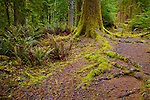 Old growth forrest near Cape Perpetua