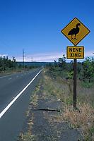 highway crossing for endemic Hawaii, USAan goose or nene, Branta sandvicensis, Hawaii, USA Volcanoes National Park, Hawaii, USA Island, the Big Island, Hawaii, USAan Islands, USAA