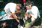Scott Albrecht & Brian Osborne Working On Black Bear