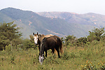 Two Horses At The Finca
