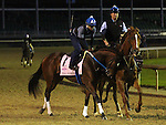 LOUISVILLE, KY - MAY 02: Terra Promessa (Curlin x Missile Bay, by Yes It's True) is ponied to the track at Churchill Downs, Louisville KY, where she worked 4 furlongs in :50.80 with exercise rider Abel Flores in preparation for the Kentucky Oaks. Owner Stonestreet Stables LLC, trainer Steven M. Asmussen. (Photo by Mary M. Meek/Eclipse Sportswire/Getty Images)
