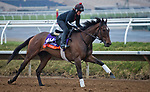 DEL MAR, CA - NOVEMBER 31: War Flag, owned by Joseph Allen, LLC and trained by Claude R. McGaughey III, exercises in preparation for Breeders' Cup Filly & Mare Turf at Del Mar Thoroughbred Club on October 31, 2017 in Del Mar, California. (Photo by Jesse Caris/Eclipse Sportswire/Breeders Cup)
