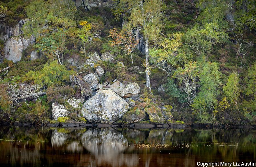Glen Strathfarrar, Western Highlands, Scotland: Hillside of trees and boulders in early fall along the Farrar River