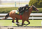 07 April 2011.  Hip #39 Discreet Cat - Pantufla filly consigned by Eddie Woods..