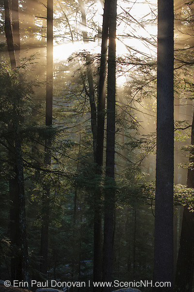 The sun breaks through the forest along the Kancamagus Highway (route 112) in the White Mountains, New Hampshire USA