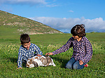 Boys playing with the bunny