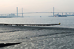 The Dartford Bridge crossing the River Thames, from Greenhithe Kent. 1990s 1991