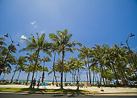 Palm lined Kuhio Beach, Waikiki, Hawaii, seen from the land side
