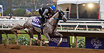 DEL MAR, CA - OCTOBER 29: Iron Fist, owned by Whispering Oaks Farm and trained by Steven M. Asmussen, exercises in preparation for the Breeders' Cup Las Vegas Dirt Mile at Del Mar Thoroughbred Club on October 29, 2017 in Del Mar, California. (Photo by Anna Purdy/Eclipse Sportswire/Breeders Cup)