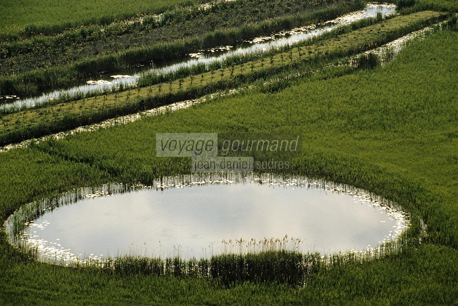 Croatie/Dalmatie: Champ de blé à Néum aux environs de Ston