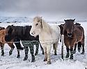 Iceland, travel, Feb 2017