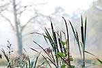 Europa, DEU, Deutschland, Nordrhein Westfalen, NRW, Rheinland, Niederrhein, Leuth, Naturpark Schwalm-Nette, Spaetsommer, De Wittsee, Uferzone, Schilf, Rohrkolben, Kategorien und Themen, Natur, Umwelt, Pflanzen, Pflanzenkunde, Botanik, Biologie, Naturschutz, Naturschutzgebiete, Landschaftsschutz, Biotop, Biotope, Landschaftsschutzgebiete, Landschaftsschutzgebiet, Oekologie, Oekologisch, Typisch, Landschaftstypisch, Landschaftspflege....[Fuer die Nutzung gelten die jeweils gueltigen Allgemeinen Liefer-und Geschaeftsbedingungen. Nutzung nur gegen Verwendungsmeldung und Nachweis. Download der AGB unter http://www.image-box.com oder werden auf Anfrage zugesendet. Freigabe ist vorher erforderlich. Jede Nutzung des Fotos ist honorarpflichtig gemaess derzeit gueltiger MFM Liste - Kontakt, Uwe Schmid-Fotografie, Duisburg, Tel. (+49).2065.677997, archiv@image-box.com, www.image-box.com]
